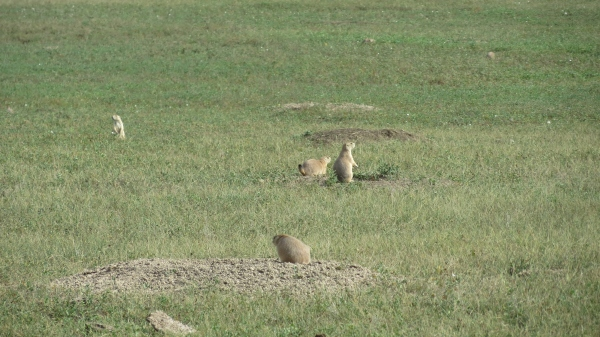 They're cute but deadly!  The signs cautioned that the prairie dogs had PLAGUE!